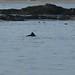 ... foi na companhia de dezenas de golfinhos!
