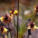 Flora e fauna encantadora e única