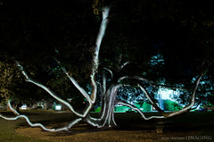 Light Painting Tree @ UE (M.V. Radar) Tags: light painting lowlight nikon low josh paintingwithlight hayden imaging d7000