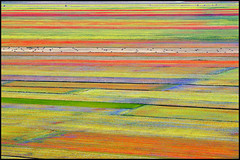 ...natural palette... (zio paperino) Tags: italien flowers italy nature colors lines landscape nikon europa europe italia natura fields umbria norcia castelluccio d90 fioritura ziopaperino mygearandme