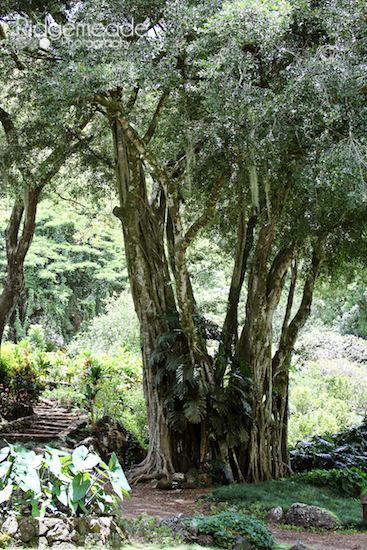 Waimea Falls Park 2