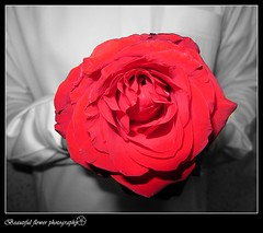 (Beautiful flower*) Tags: life red white man black rose person was it if everyone fragrance  isolate managed     inhalation