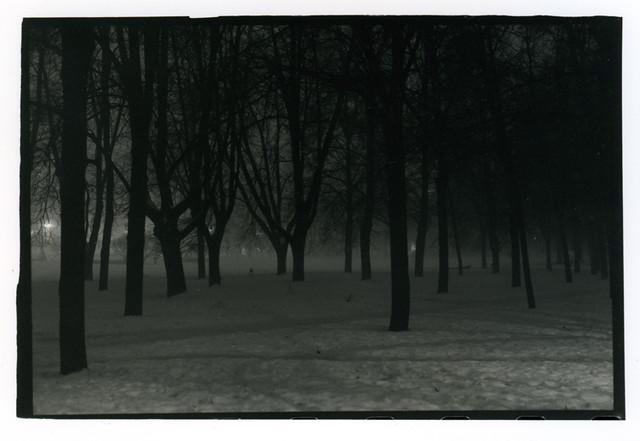 Lukiškės medžiai