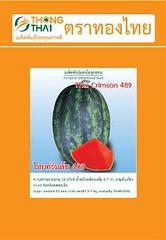 muốn mua bán hạt giống dưa hấu ThaiCrimson489 (Medium)  12 k