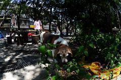 DSC_3806 (Ed Tsai Photography) Tags: people dog green nikon d90 nikkor105mmf28fisheye