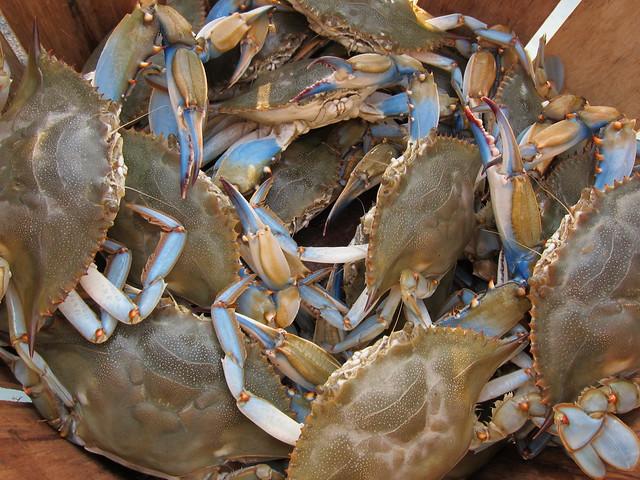 Crabbing et al 024