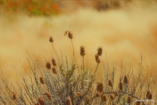 Por los campos de Extremadura Acebo- Caceres
