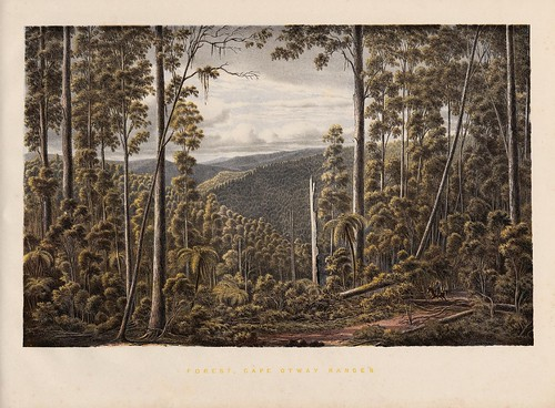 Forest, Cape Otway Ranges