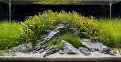 iaplc 2011 entry (George Farmer) Tags: aquascape natureaquarium georgefarmer iwagumi