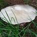 2011.07.27.Garden.Mushroom.DSCF4180
