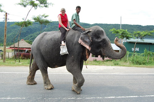 Iona took a ride on elephant