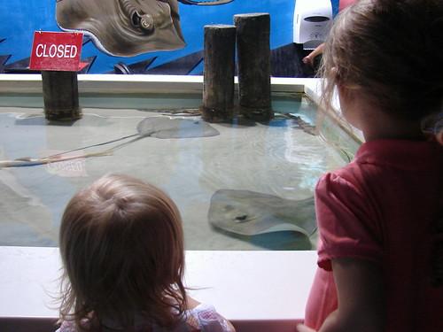 Aquarium Pic 6