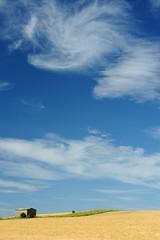 Wiltshires' Prarie (ColnePoint) Tags: blue summer england sky southwest landscape nikon wheat farming shed july 100views 400views 300views 200views wiltshire 50views 2010 altonbarnes wansdyke arable 150views southwestengland d700 77mmhoyapro1dcircularpolariser 77mmhoyapro1duvfilter nikon70200mmf28gedifafsvriinikkor bishopcanning