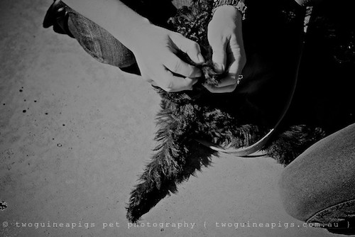 Vet check mock by twoguineapigs pet photography