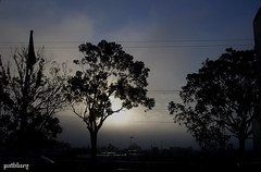Maitland New South Wales Australia (pat.bluey) Tags: city morning mist sunrise silhouettes australia newsouthwales 1001nights maitland supershot myfuji flickraward spiritofphotography 1001nightsmagiccity