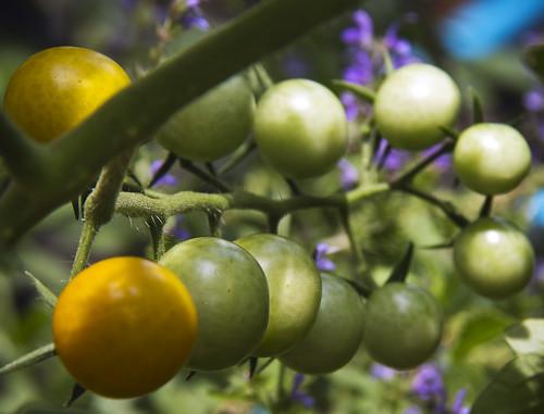 ripening by McBeth
