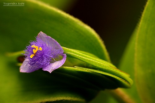 Hidden Beauty by Yogendra174