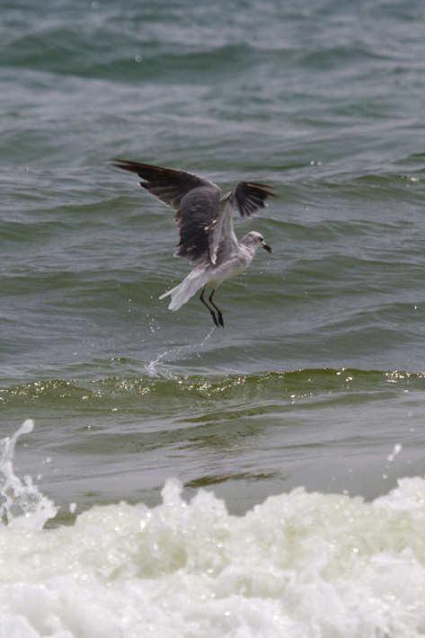 072811_beachbird06