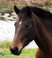No stio (Giancarlos F. Martins) Tags: horse st se si sl sd sa sg cavalo challengeyouwinner nanaturezainnature giancarlosferreira
