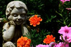Aug062011_0901-Garden-Angel (©Delos Johnson) Tags: flowers canon garden sunflower topaz delos g9 detail4 denoise