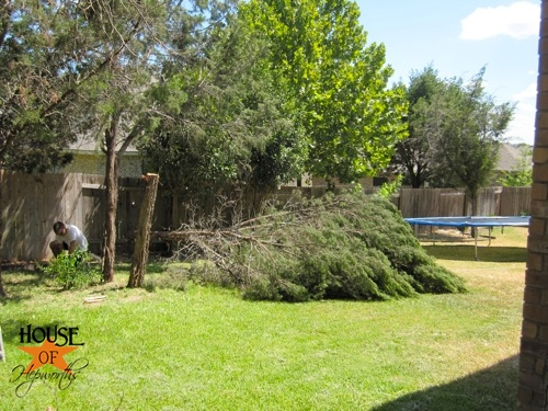 yard_work_tree_cutting_09