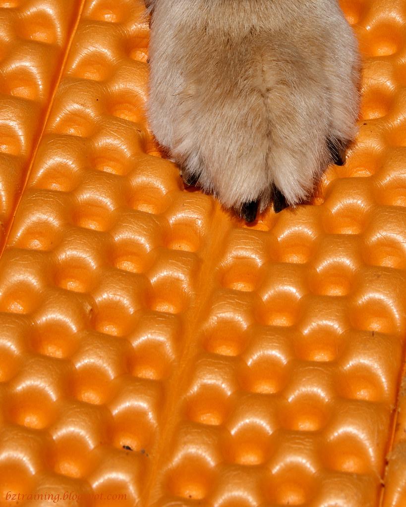 Orange Pad