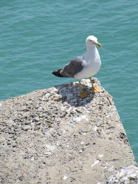 3 Seagull Cádiz