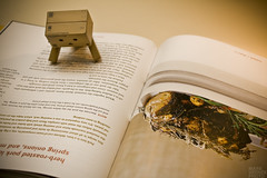 365 Photo Project - 221/365 (Mark Verner) Tags: canon reading cookbook danbo 221365 danboard eosrebelxsi 365photoproject09aug2011