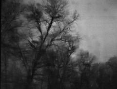 You are alone (Emily Savill) Tags: sf b trees shadow blackandwhite bw white black 120 film nature analog dark holga scary lomo lomography alone you w low lofi scan creepy iso negative 200 fi analogue asa premium sillhouette lowfi 120sf arista