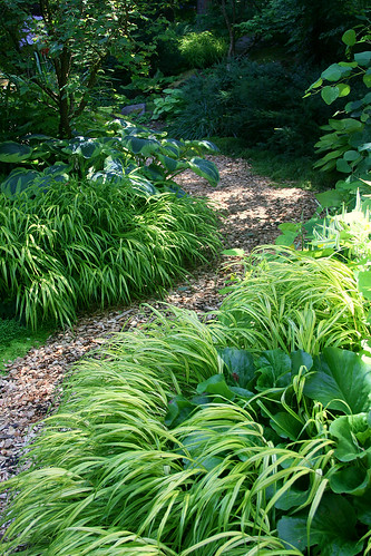 hakonechloa path edging