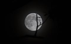 Grain Moon (jeffs4653) Tags: moon night newjersey fullmoon telephoto grainmoon