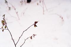 kcp200_t70061 (Jagot) Tags: uk england snow color film 35mm canon 50mm kodak britain f14 200 plus fd canont70 t70 canonfd50mmf14 kodakcolorplus200 epsonv330