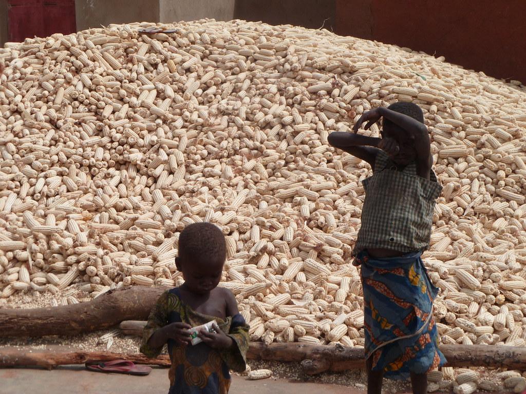 Enfants et maïs Togo
