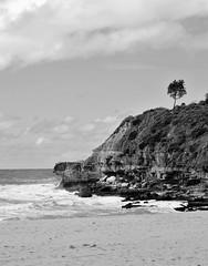 Lone Tree @ Warriewood Beach (scatrd) Tags: mono warriewoodbeach