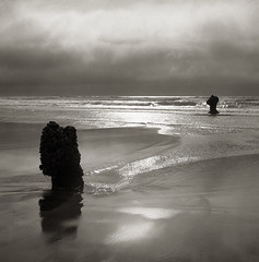 Ghost Forest, Neskowin, Oregon (austin granger) Tags: trees film beach oregon square preserved neskowin sentinels pawns yashicamat ghostforest austingranger
