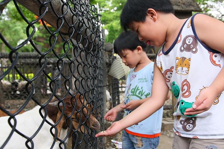 六福村動物園069