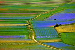 Castelluccio di Norcia (Alessandro Censi) Tags: landscape paesaggi norcia castelluccio montisibillini fioritura