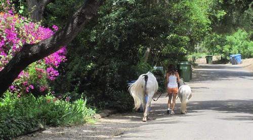 horse and mini