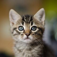 [フリー画像] 動物, 哺乳類, 猫・ネコ, 子猫・小猫, 201107181100