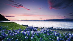Slsetur  safjarardjpi - Sunset in the westfjords - Iceland (Arnar Bergur) Tags: ocean flowers blue sunset red sea sky black mountains green grass clouds sunrise canon iceland purple stones shore arnar 1740 sland westfjords isafjardardjup safjarardjp