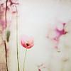 my scarlet head (silviaON) Tags: flower g july poppy textured gpc 2011 idream bej memoriesbook floralessence artistictreasurechest oracope magicunicornverybest
