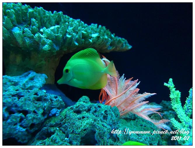 110711小丑魚主題館 (24)
