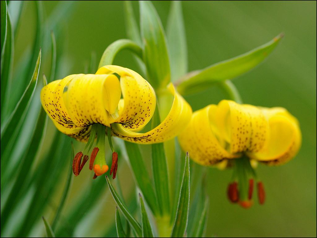 Resultado de imagen de marcolic groc nuria
