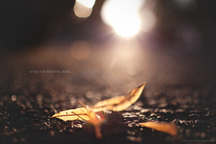 after the pouring rain (In Memory Lane~) Tags: summer sun nature 35mm leaf dof bokeh mark ii flare 5d 35l