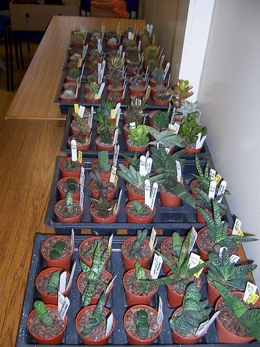 Sale Plants - Dr. Tony Roberts's Gasterias In The Flesh