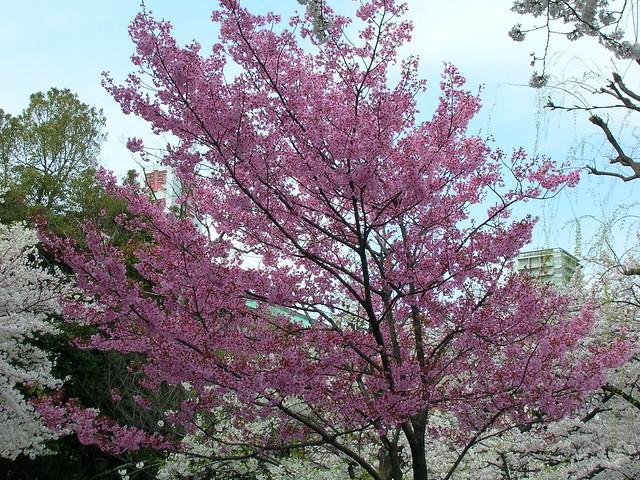 d7-20-ueno-park