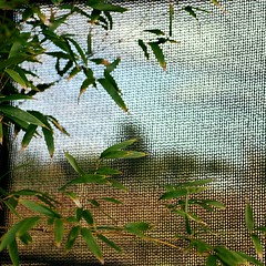 from a distance (gil walker) Tags: dof bamboo foliage gauze shadecloth abstractlandscape shadescreen