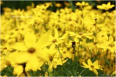 Botanischer Garten 7 (peter pirker) Tags: trip flower yellow canon linz austria sterreich gelb ausflug blume botanischergarten peterfoto eos550d