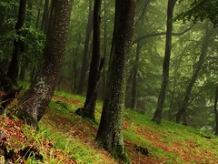 High Forest... in the rain (JoannaRB2009) Tags: las trees tree forest woods foggy poland polska fantasy polen mga neverwinter kaszuby pomorze bej faerun mglisty