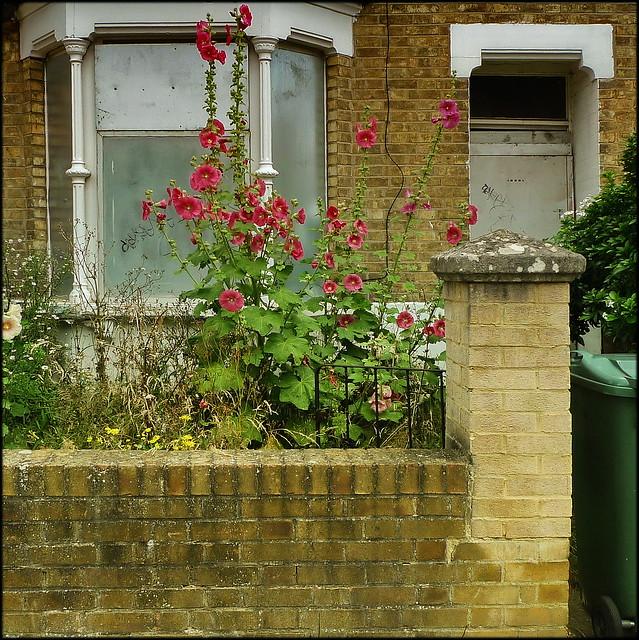 Best of Oxford Gardens 106